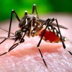 Obavijest mještanima o adulticidnom tretmanu komaraca na području Općine Donji Kraljevec