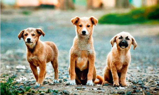 Letak o zakonskim obvezama skrbnika i vlasnika psa